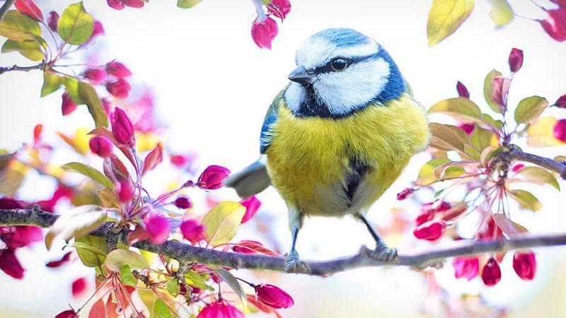 枝にとまる鳥の写真