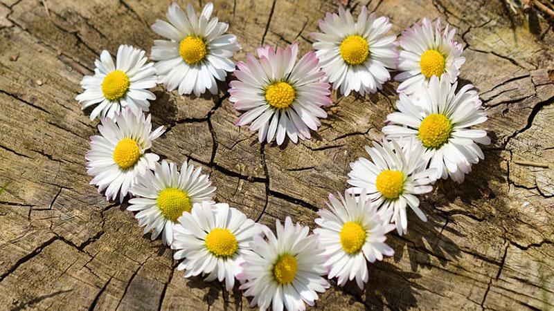 ハートの形に置いた花