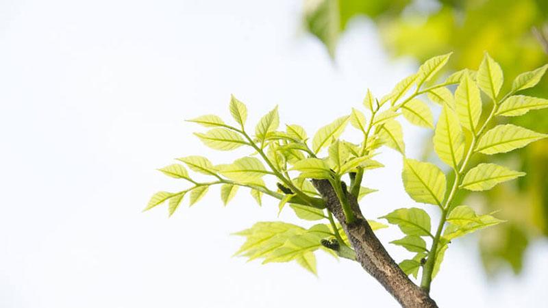 光が当たっている木の枝