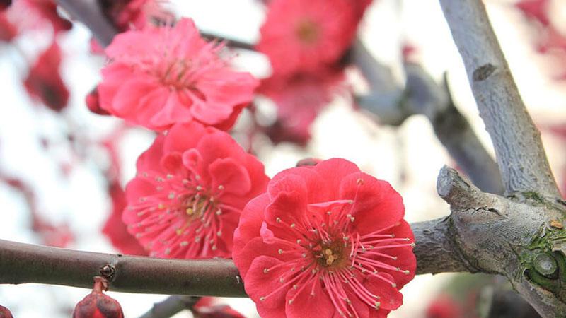 赤い花が咲いている画像