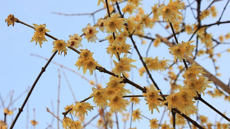 枝に咲く花の写真