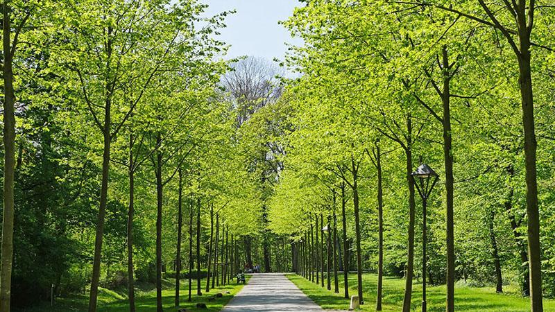 木に囲まれた道の写真